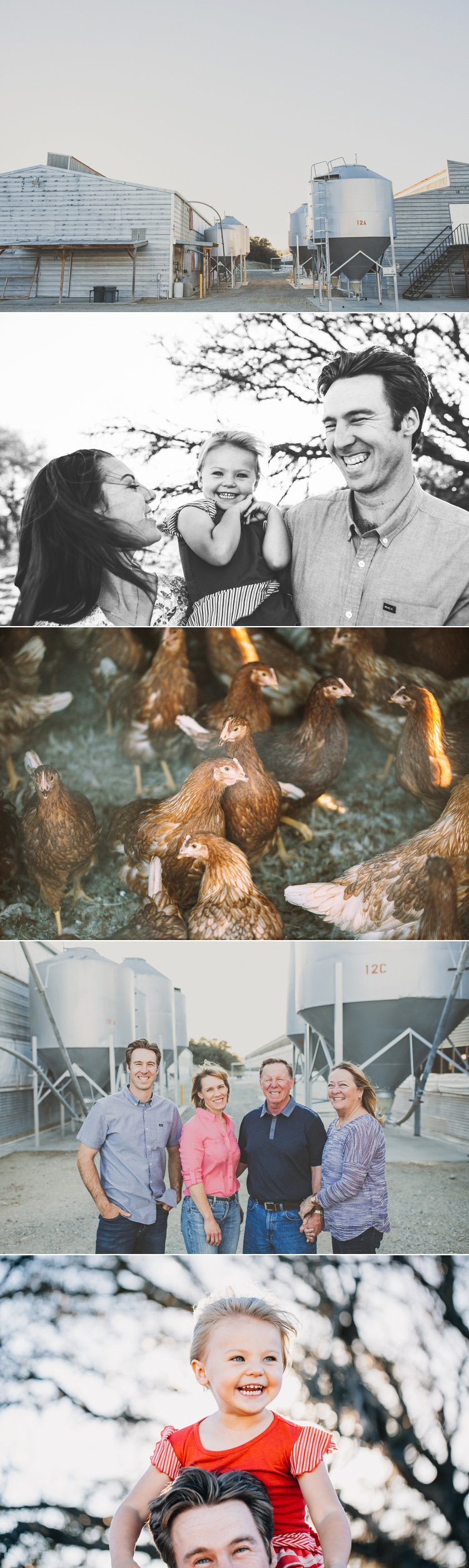Organic Chicken Farm Commercial Photography